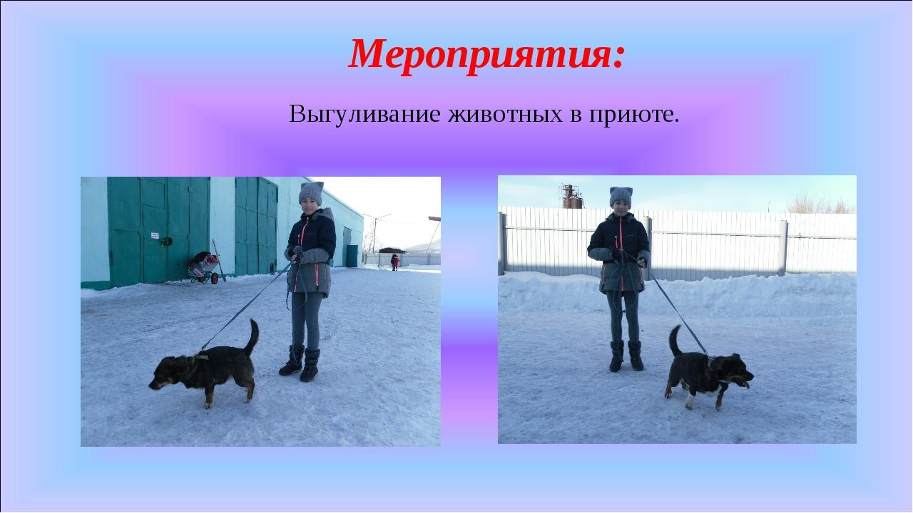 Мероприятия: Выгуливание животных в приюте.