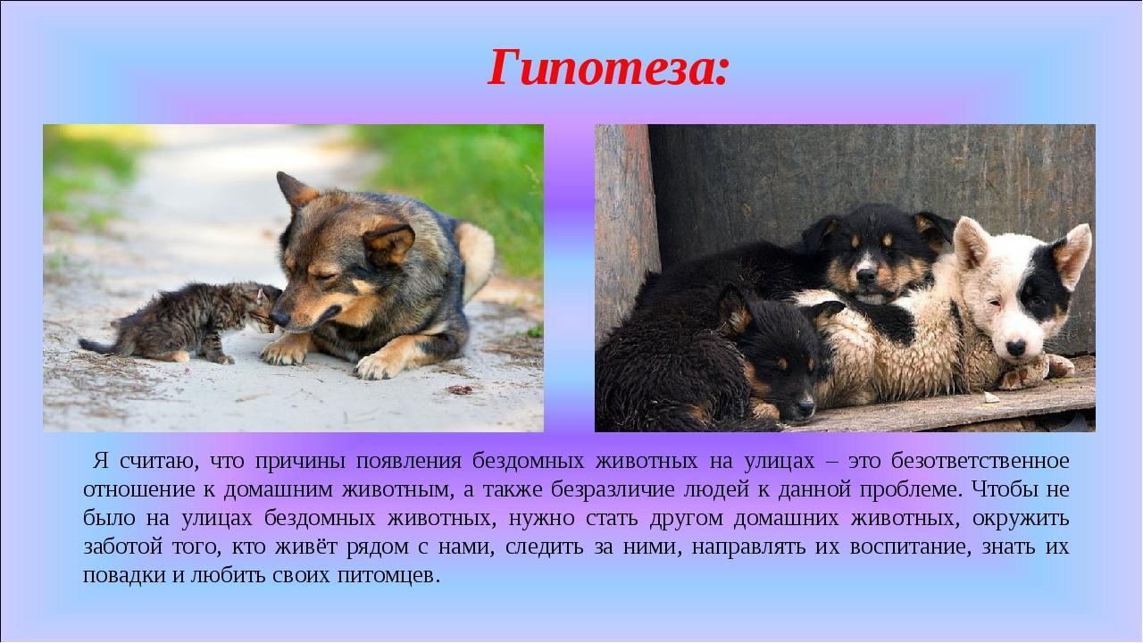 Гипотеза: Я считаю, что причины появления бездомных животных на улицах – это...