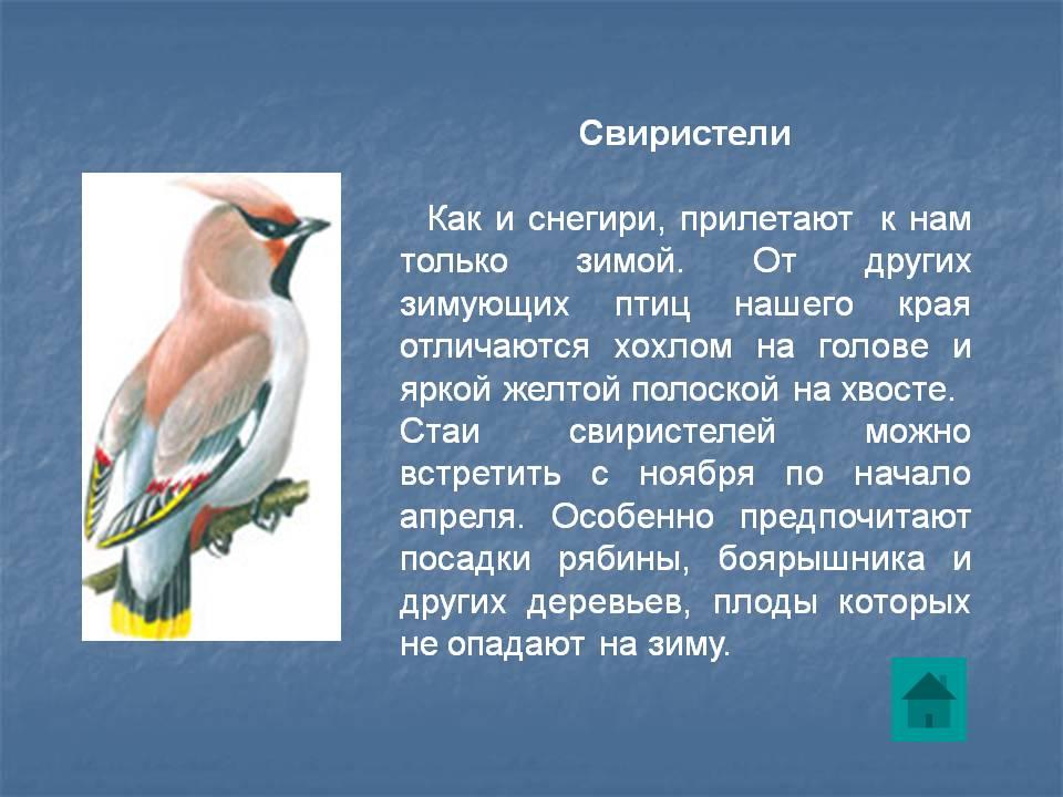 рассказ птичка с картинками разберемся проблеме