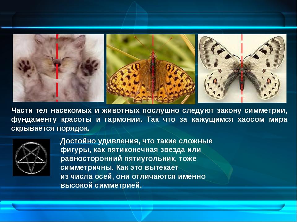 Части тел насекомых и животных послушно следуют закону симметрии, фундаменту...