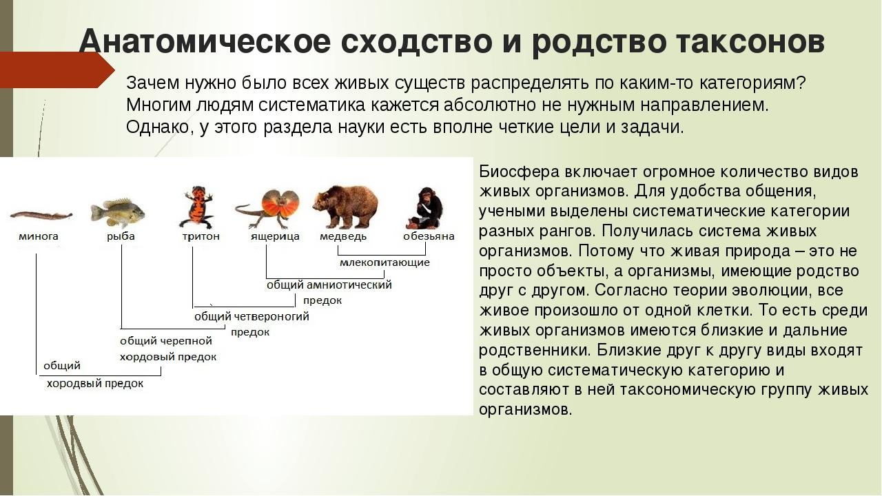 Анатомическое сходство и родство таксонов Зачем нужно было всех живых существ...