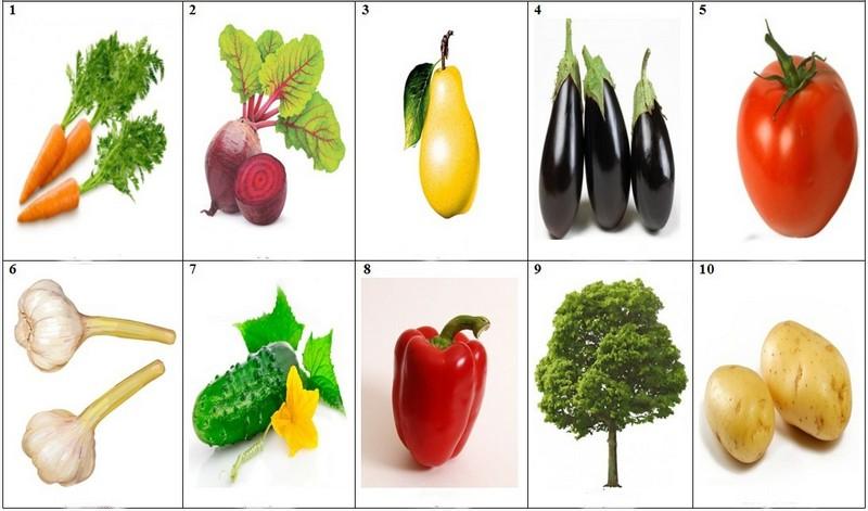 картинки овощей для занятий размеры