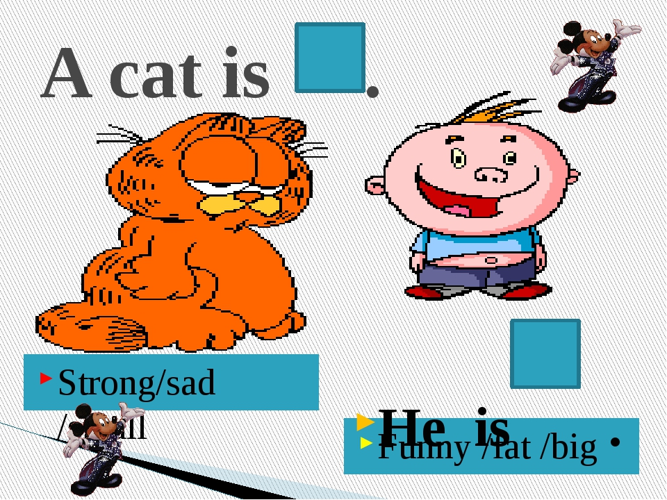 A cat is . Strong/sad /small Funny /fat /big He is .