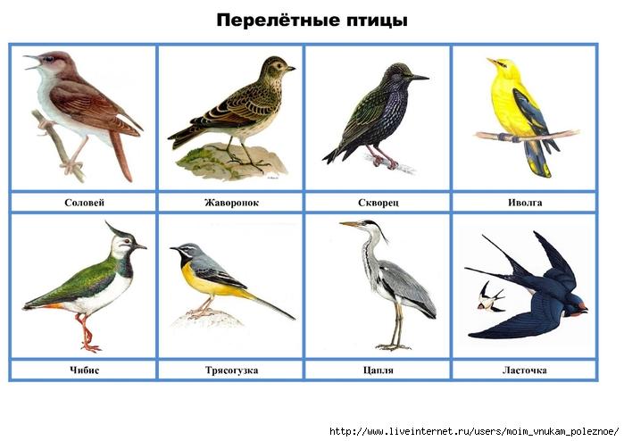 Дидактические картинки птицы с названиями