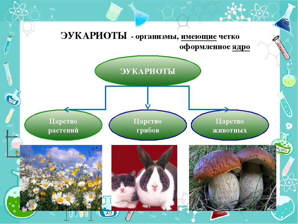 ЭУКАРИОТЫ - организмы, имеющие четко оформленное ядро ЭУКАРИОТЫ Царство расте...