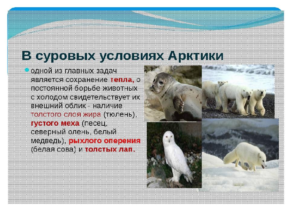 самый арктические пустыни картинки с описанием жизнь тобой