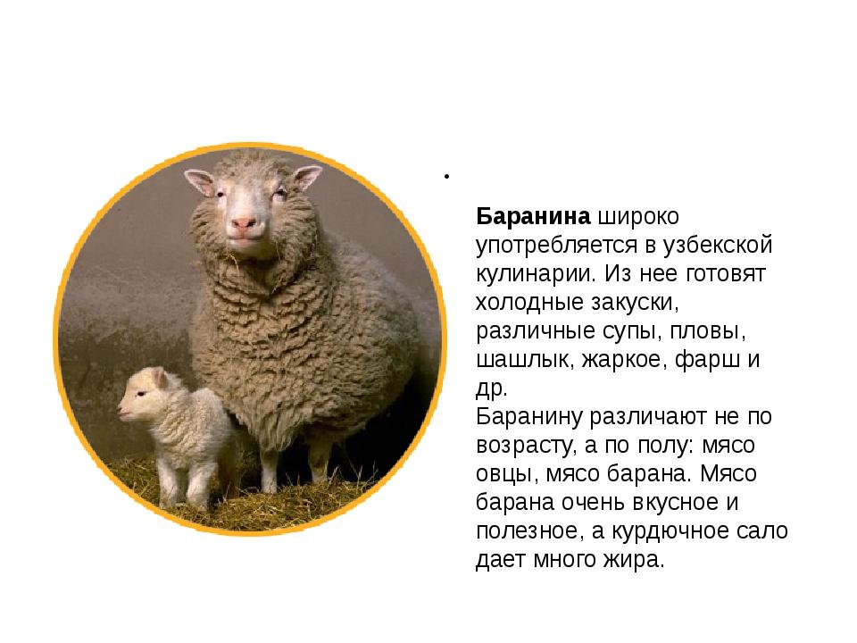 Баранинашироко употребляется в узбекской кулинарии. Из нее готовят холодные...