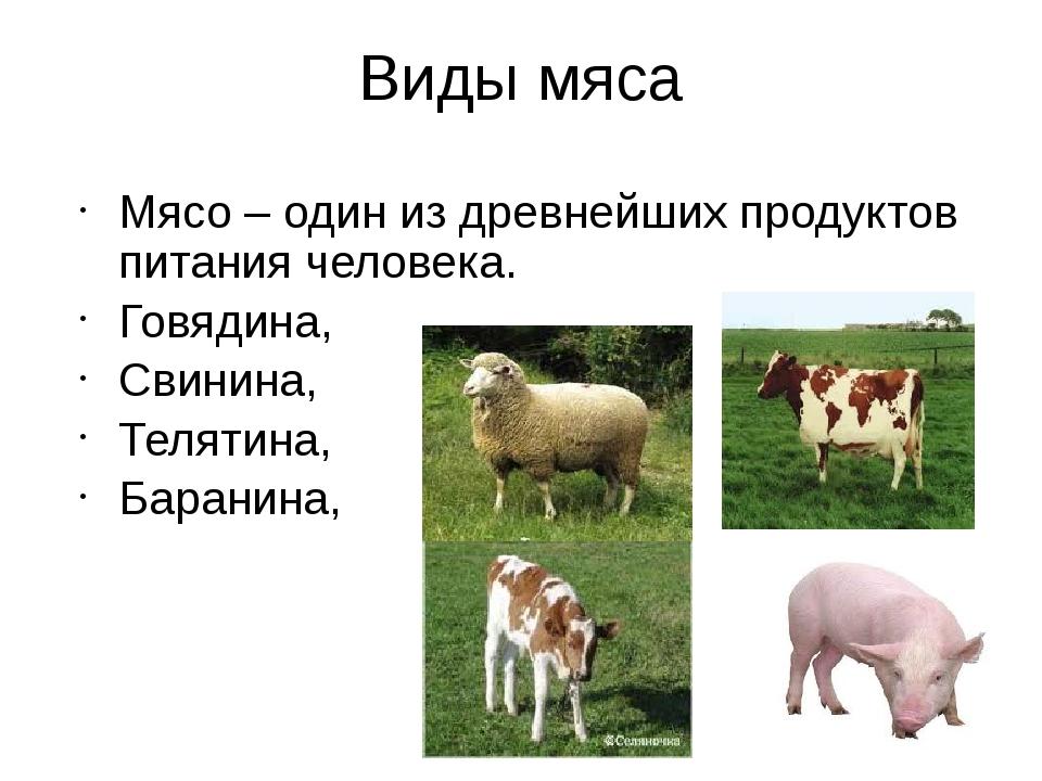 Виды мяса Мясо – один из древнейших продуктов питания человека. Говядина, Сви...