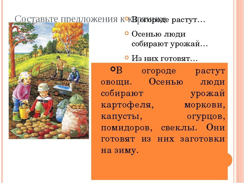 Составьте предложения к картинке В огороде растут… Осенью люди собирают урожа...