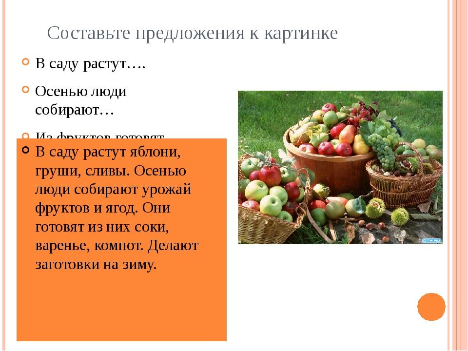 Составьте предложения к картинке В саду растут…. Осенью люди собирают… Из фру...