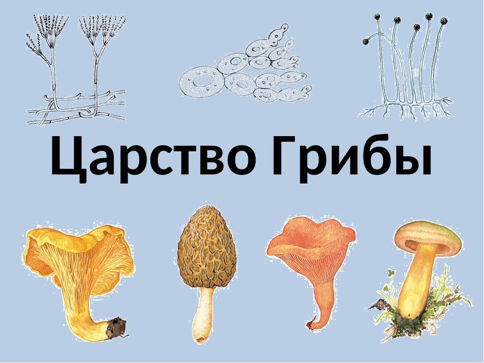 обои царство грибов картинки гарантируем полную