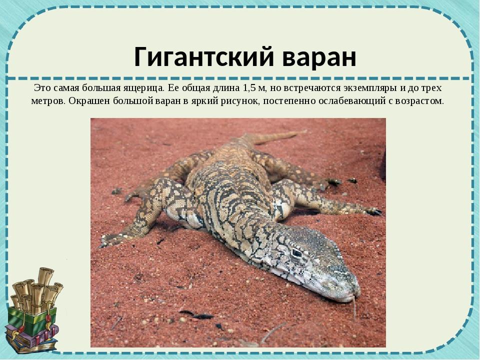 Это самая большая ящерица. Ее общая длина 1,5 м, но встречаются экземпляры и...