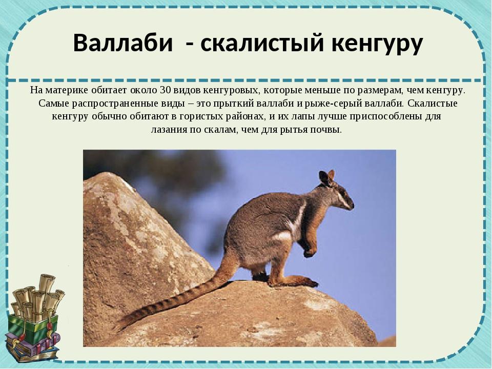 На материке обитает около 30 видов кенгуровых, которые меньше по размерам, че...