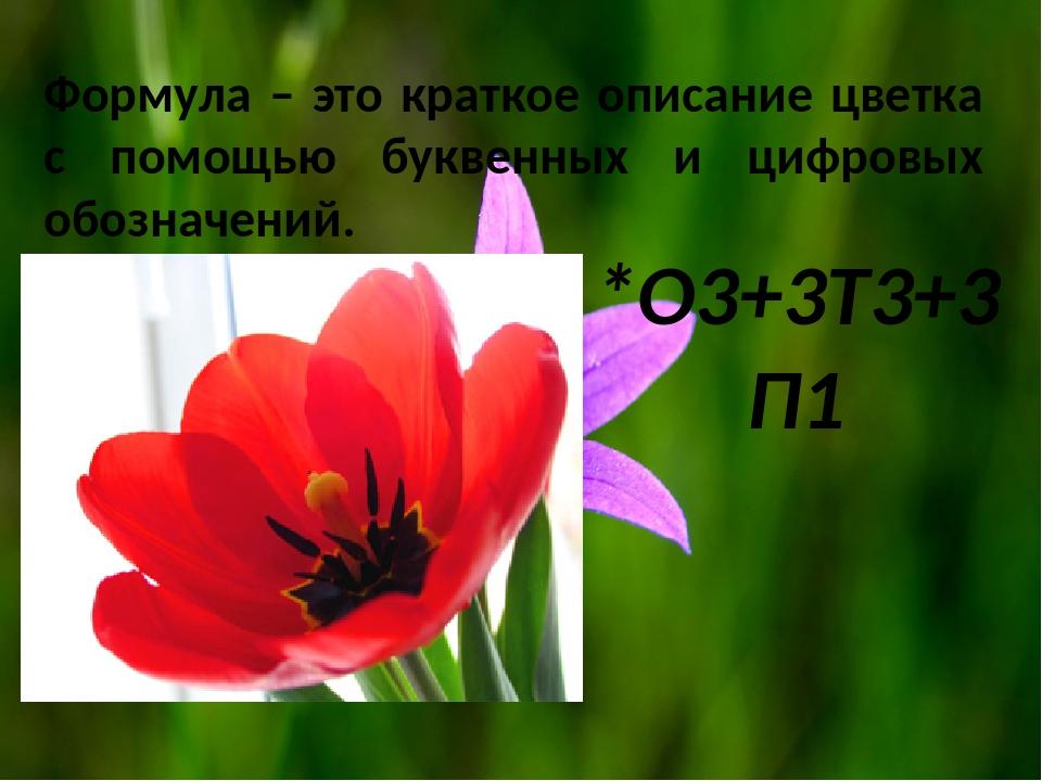 *O3+3T3+3П1 Формула – это краткое описание цветка с помощью буквенных и цифро...