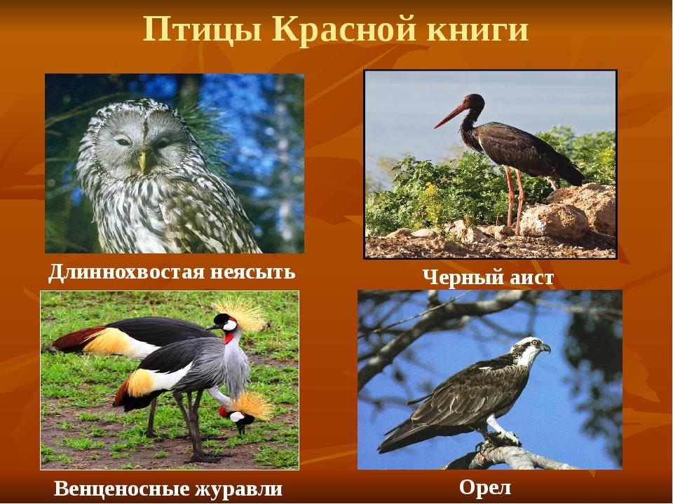 Птицы красной книги россии картинки и названия