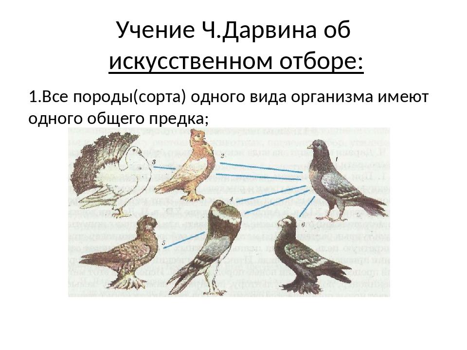 1.Все породы(сорта) одного вида организма имеют одного общего предка; Учение...