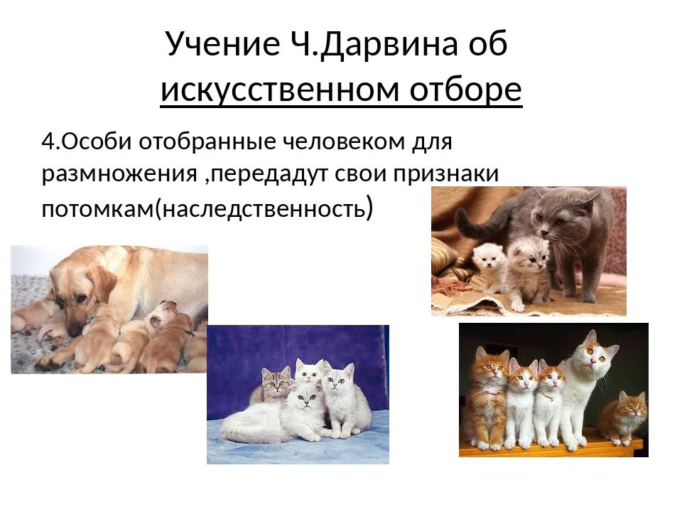 4.Особи отобранные человеком для размножения ,передадут свои признаки потомка...