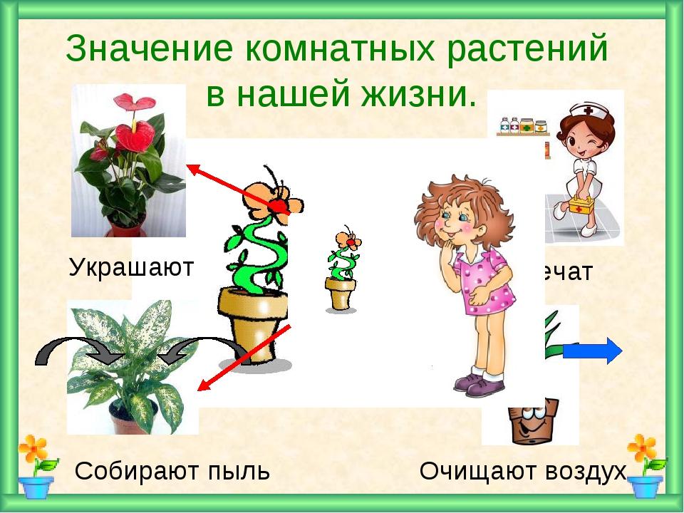 напишу картинки комнатных растений в презентации возвращения крым