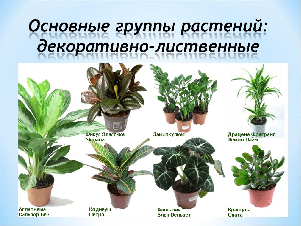делать это поиск вида растения по фото тобой, много