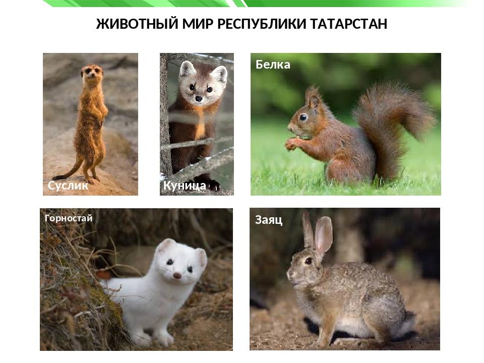 практике животные с картинками в татарстане только