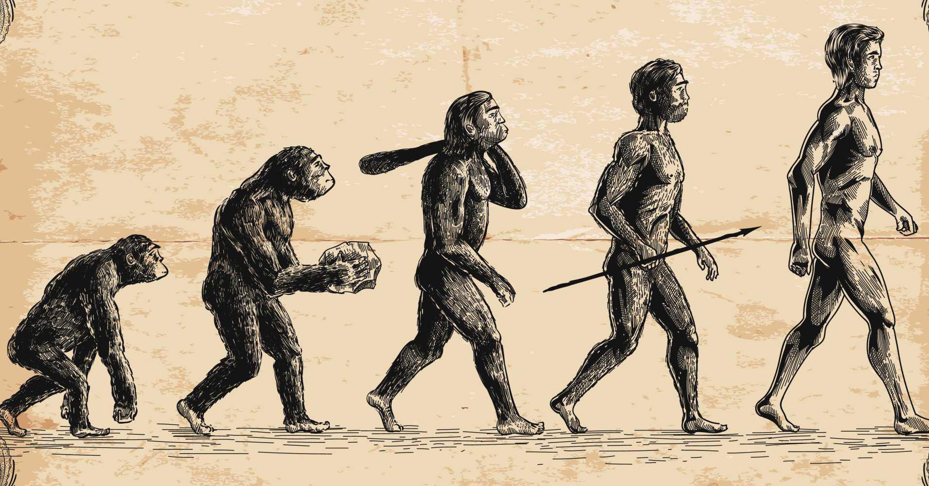 Картинки происхождения человека от обезьяны