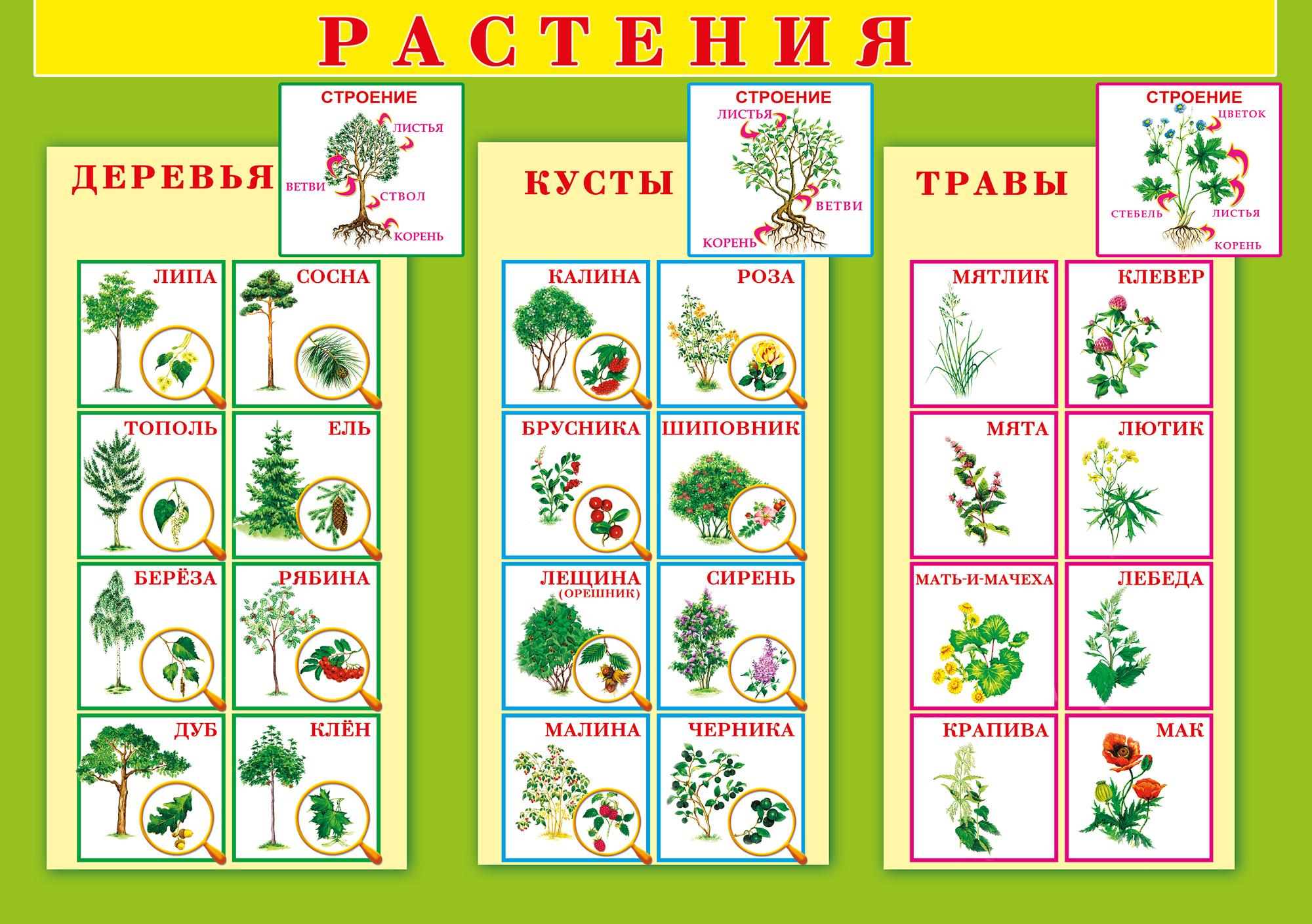 Картинки растительный мир для детей