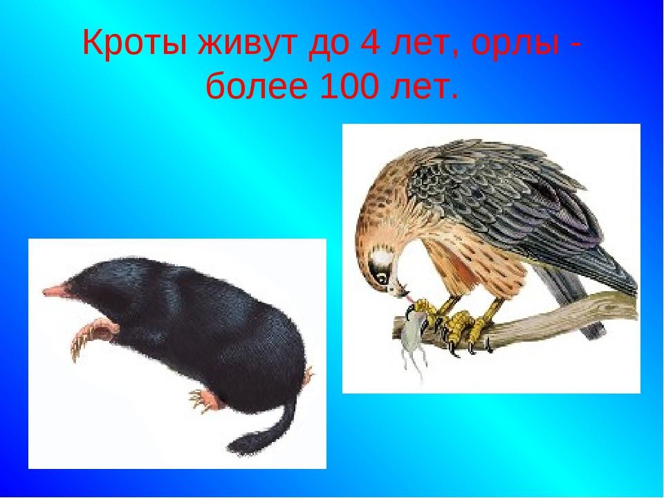 Кроты живут до 4 лет, орлы - более 100 лет.