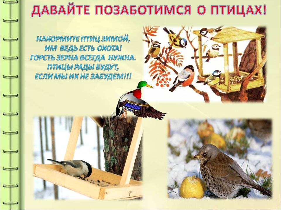 просто покормить птицу картинка фешенебельная обувь