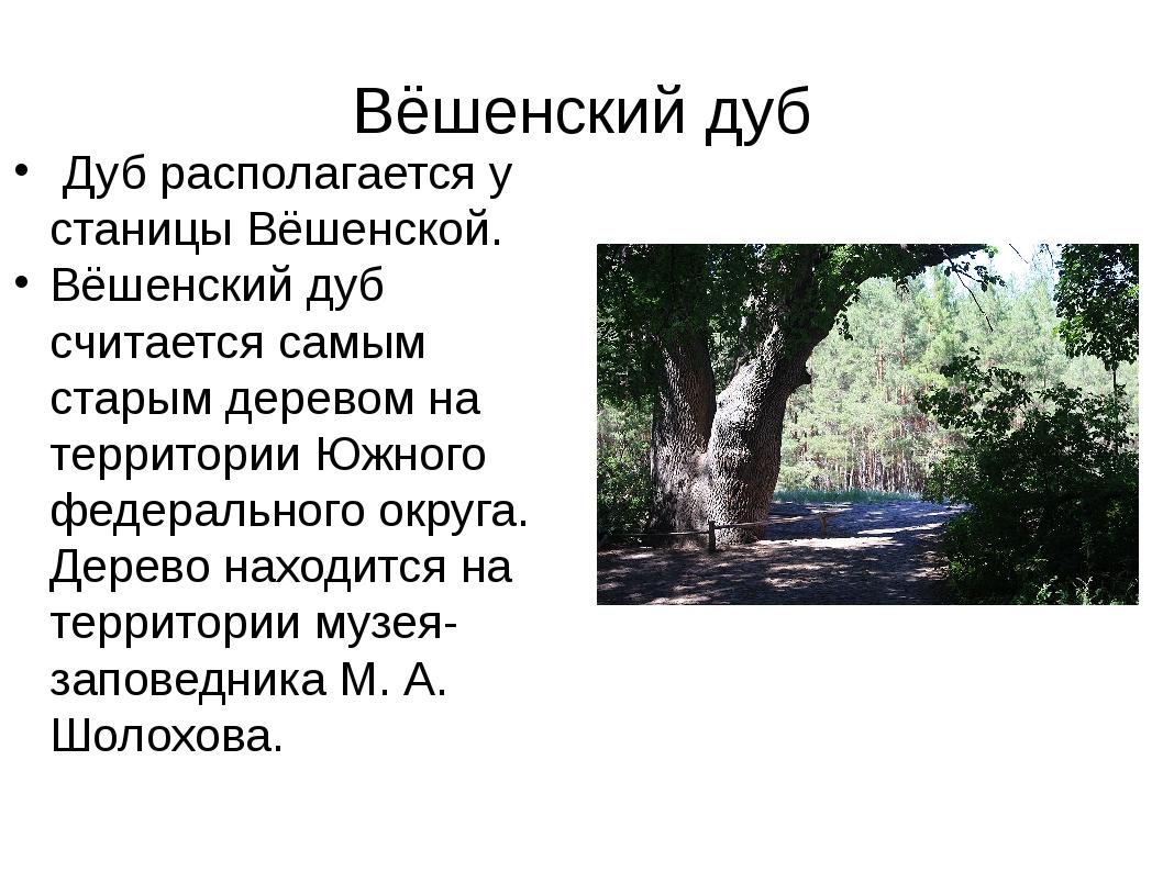 Вёшенский дуб Дуб располагается у станицы Вёшенской. Вёшенский дуб считается...