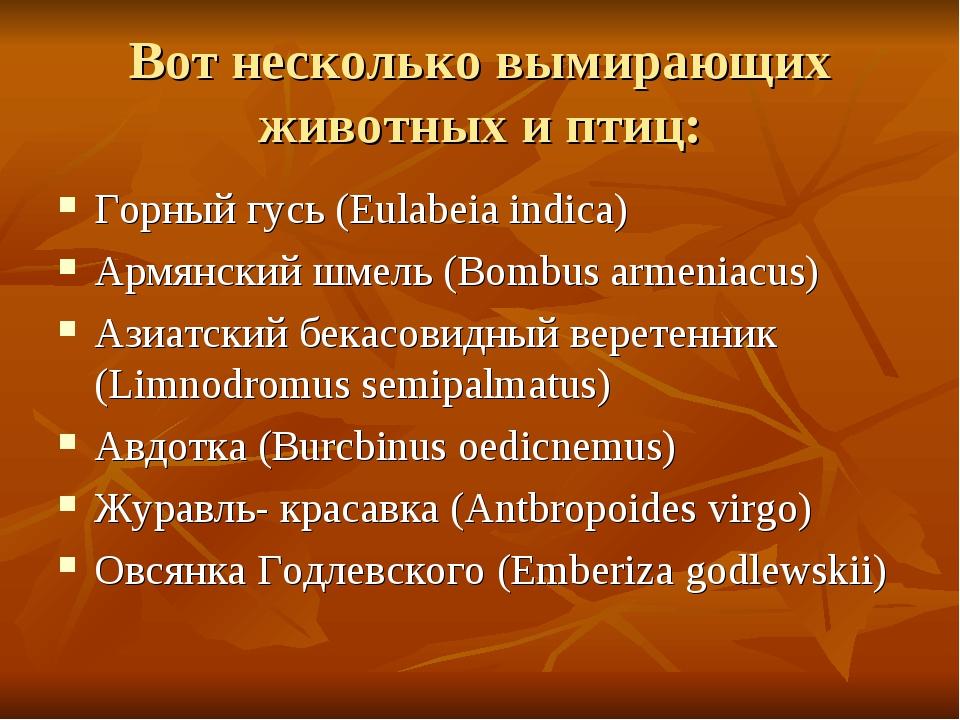 Вот несколько вымирающих животных и птиц: Горный гусь (Eulabeia indica) Армян...