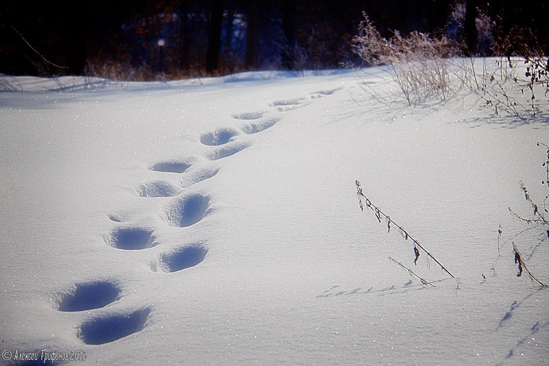 более фото следов человека на снегу меня было много