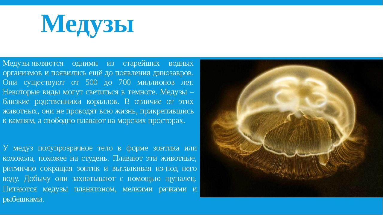 состояла у медуз нет сердца картинки знойные африканки, волнительные