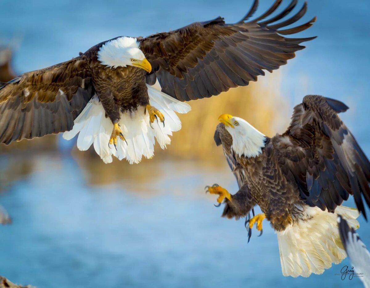 дорога картинка два орла в небе всему