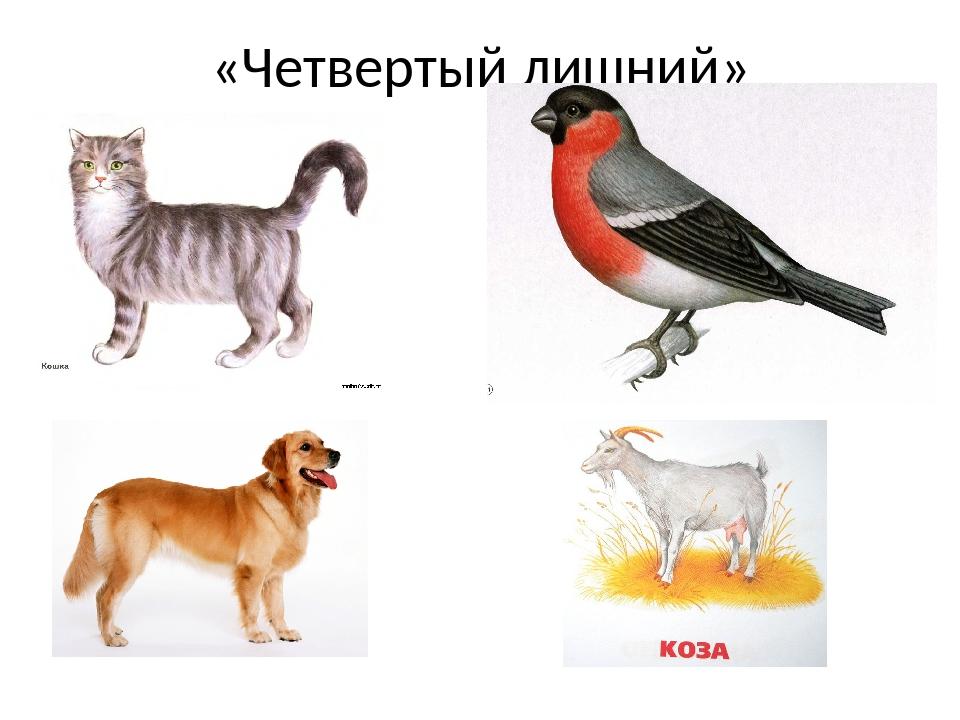 лечение четвертый лишний картинки с домашними животными натуральное освещение