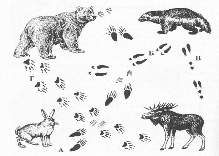 снимают картинки раскраски следы зверей тела