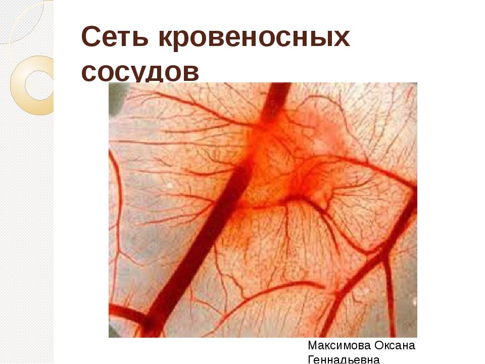 Сеть кровеносных сосудов Максимова Оксана Геннадьевна