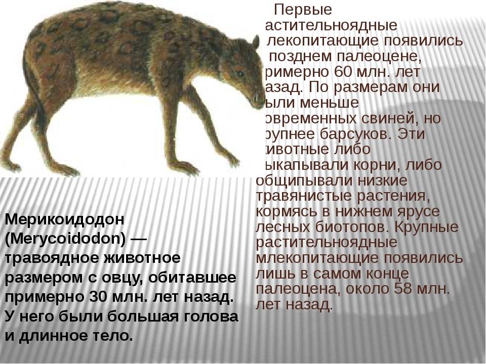 Первые растительноядные млекопитающие появились в позднем палеоцене, примерн...