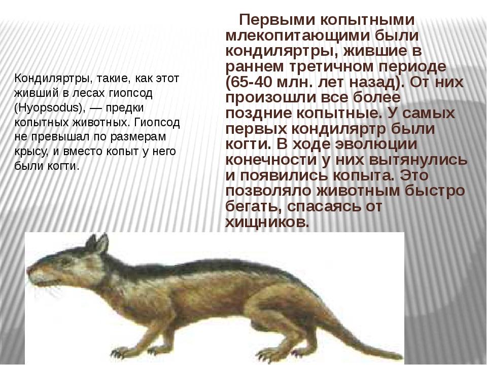 Первыми копытными млекопитающими были кондиляртры, жившие в раннем третичном...
