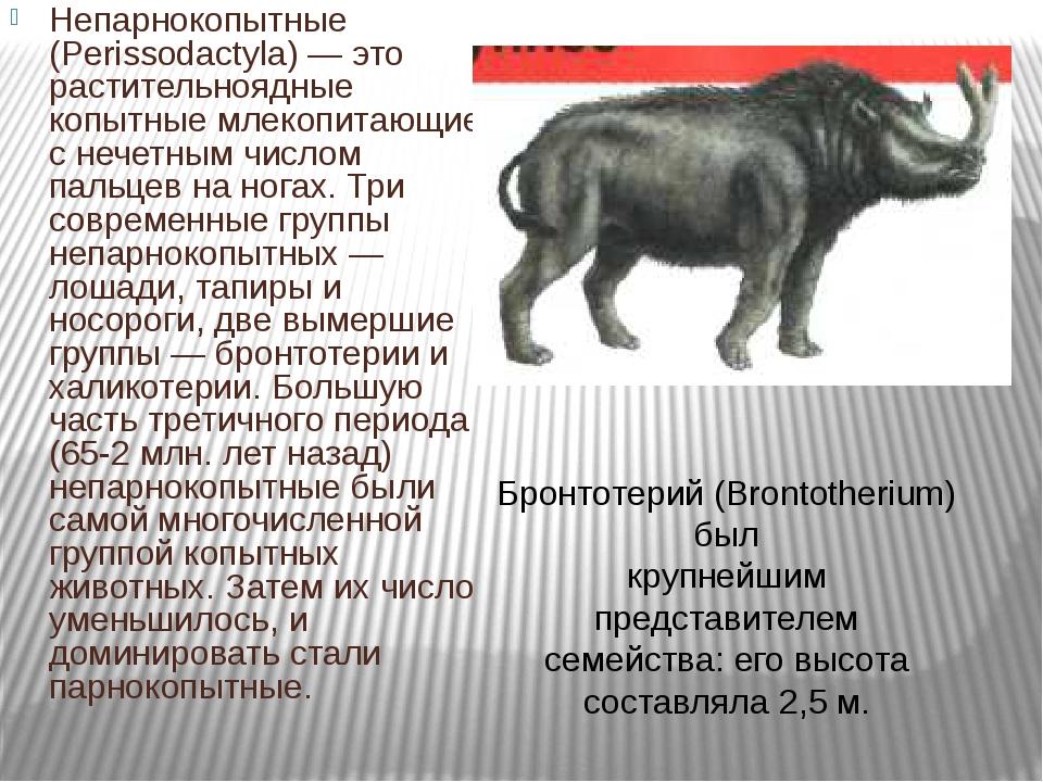 Непарнокопытные (Perissodactyla) — это растительноядные копытные млекопитающи...