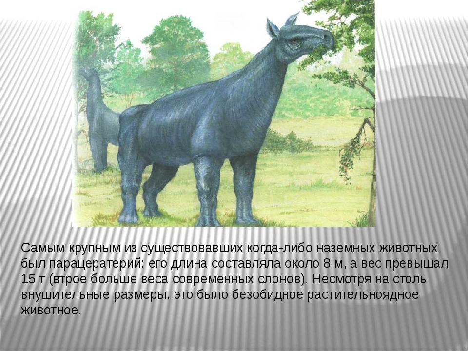 Самым крупным из существовавших когда-либо наземных животных был парацератери...