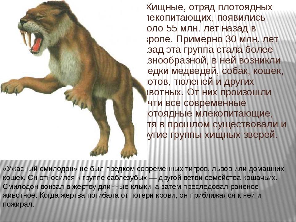 Хищные, отряд плотоядных млекопитающих, появились около 55 млн. лет назад в...