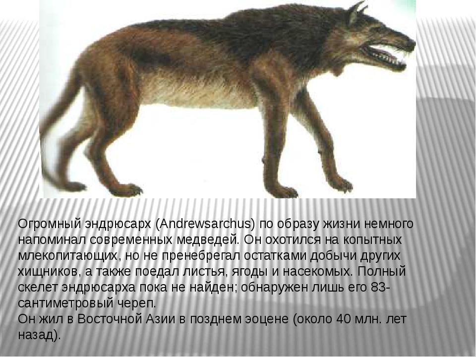Огромный эндрюсарх (Andrewsarchus) по образу жизни немного напоминал современ...