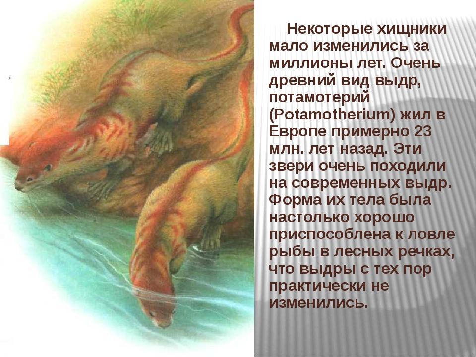 Некоторые хищники мало изменились за миллионы лет. Очень древний вид выдр, п...