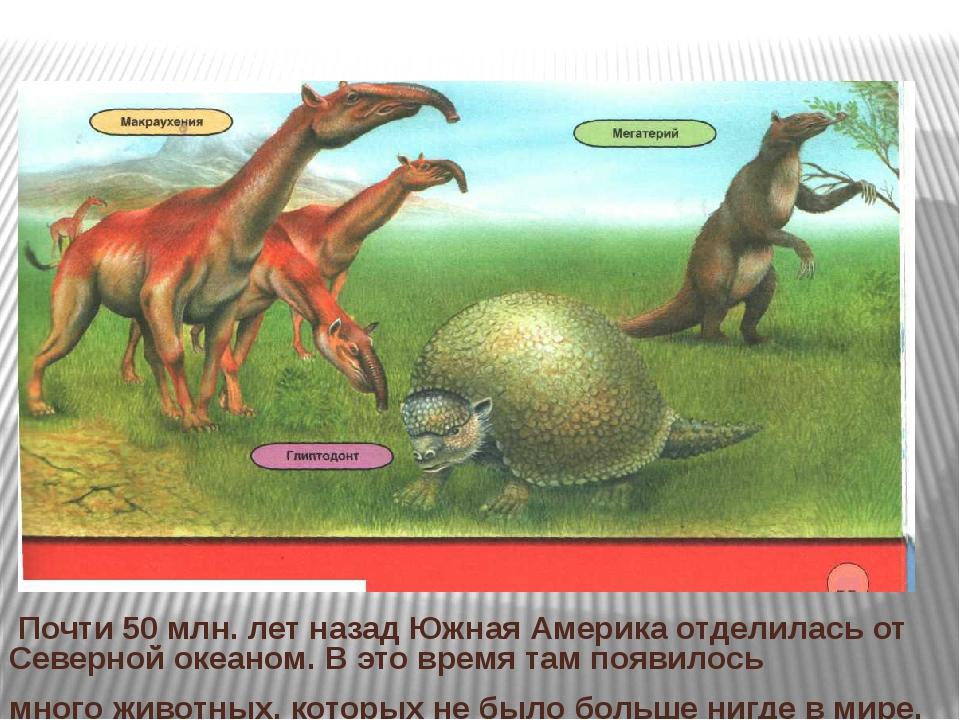 Почти 50 млн. лет назад Южная Америка отделилась от Северной океаном. В это...