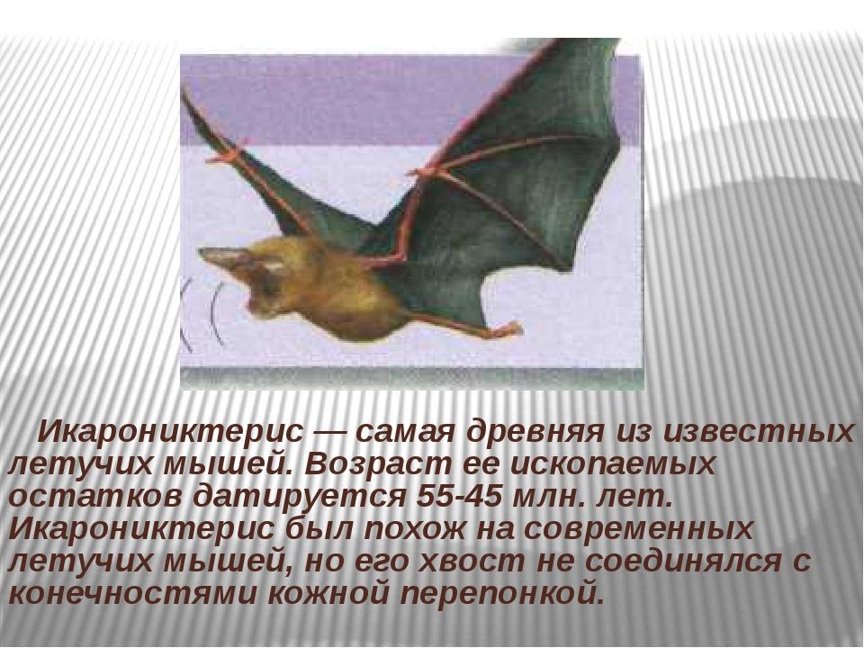 Икарониктерис — самая древняя из известных летучих мышей. Возраст ее ископае...