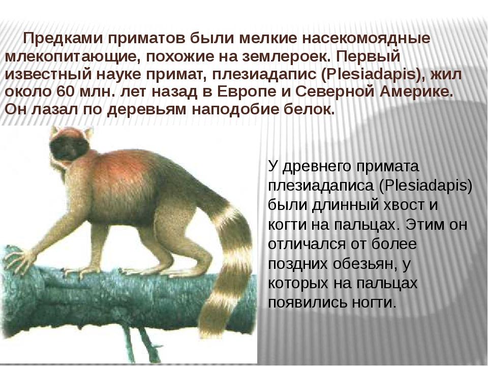 Предками приматов были мелкие насекомоядные млекопитающие, похожие на землер...