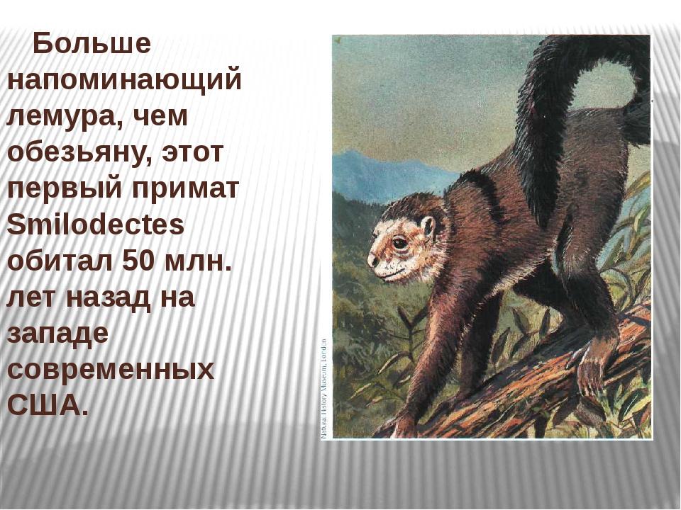 Больше напоминающий лемура, чем обезьяну, этот первый примат Smilodectes оби...