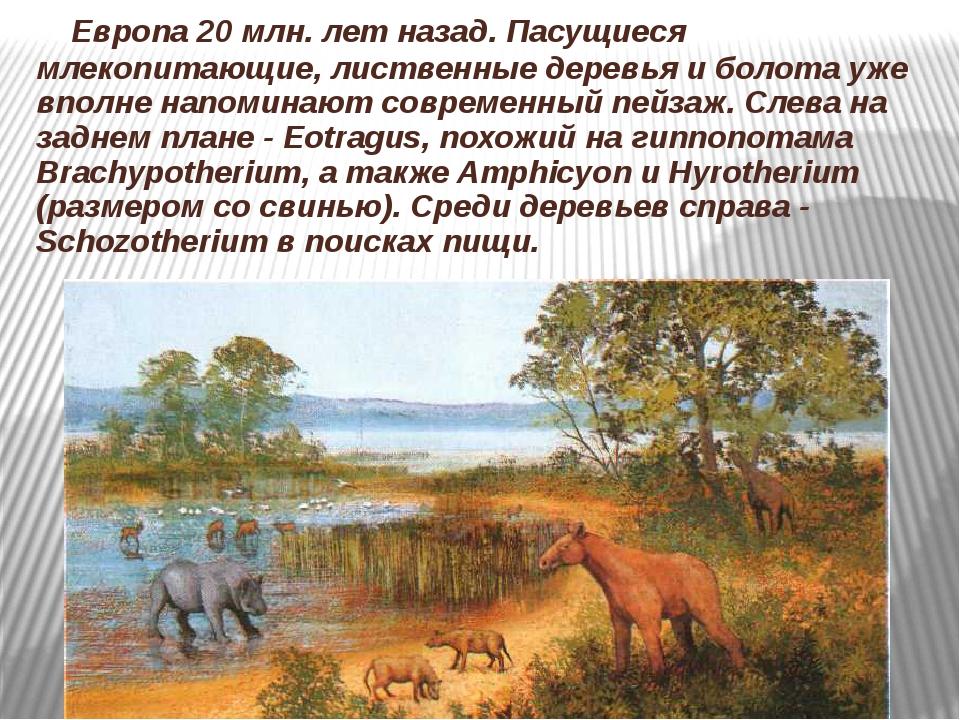 Европа 20 млн. лет назад. Пасущиеся млекопитающие, лиственные деревья и боло...