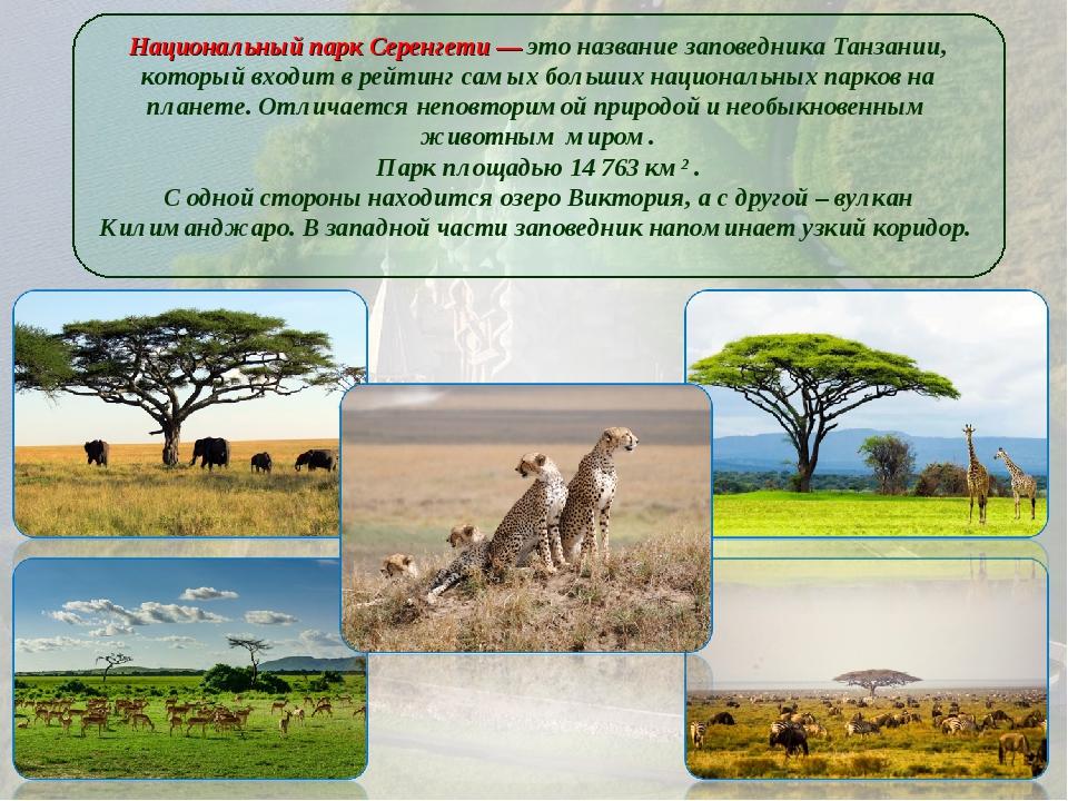 Национальный парк Серенгети — это название заповедника Танзании, который вход...