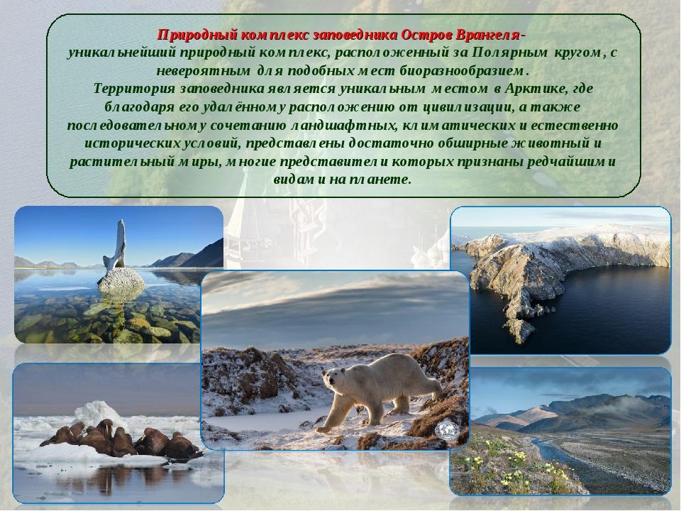 Природный комплекс заповедника Остров Врангеля- уникальнейший природный компл...